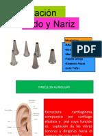 Region Nasal Examen