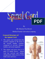 Spinal Cord & Nerves