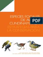 Especies focales de aves cundinamarca - estrategias para su conservacion.pdf