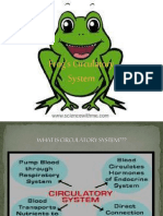 Circulatory system of frog for class ix