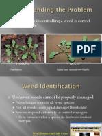 Weed ID Slides