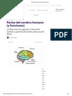 _Partes Del Cerebro Humano (y Funciones)