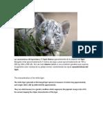 Las Características Del Tigre Blanco