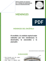Meninges
