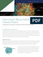 Informacion Básica Sobre Las Celulas Madre