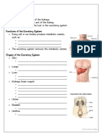 the excretory system student guided notes