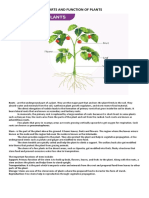 Parts and Function of Plants and Animal Cell