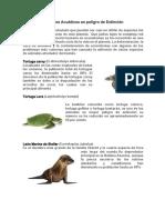 Animales Acuáticos en Peligro de Extinción