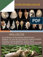 REPRODUCCION EN MOLUSCOS.pptx