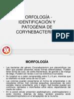 Morfología - Identificación y Patogénia de Corynebacterium