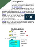 1 Gluconeogenesis Power Point
