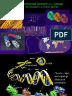 Genom_uman.ppt