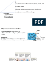 connective tissue report.docx.pptx