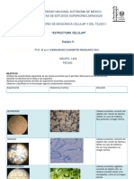 Informe Estructura Celular