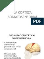corteza sensoririiaal