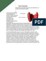 Clase 2 Paratiroides