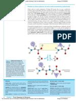 Peptide Bond