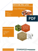 Cultivo de Pecano- Agronegocios