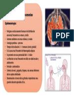 EPIdemiologia MICOPplasma