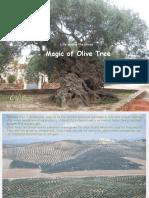 Magic of Olives