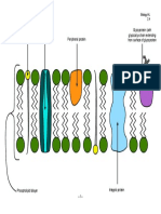 2.4 Membranes (Page 1).pdf