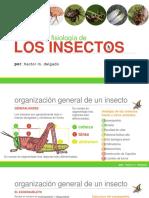 02 - Estructura y Fisiología de Los Insectos