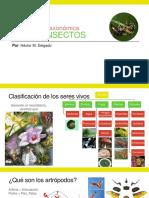 01 - Clasificación de Los Insectos