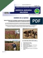SIEMBRA DE QUINUA.pdf