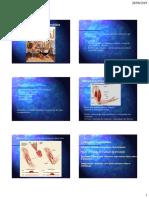 Aula Motor Neurofisiologia