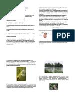 ESPECIALIDAD-DE-SEMILLAS_desarrollado.do.docx