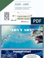 ADN-ARN