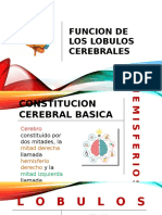 Funcion de Los Lobulos Cerebrales (1)