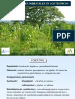 IV.- Repoblaciones Forestales en Los Trópicos
