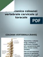 Biomecanica Coloanei Vertebrale Cervicale Si Toracale