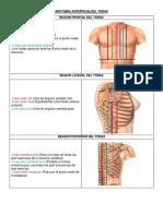1 - Anatomia Superficial Del Torax