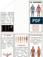 Folleto Anatomia