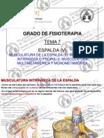 Fisioterapia ANATOMIA HUMANA I Tema 07 Musculatura de La Espalda (II) 2016_17