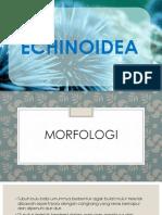 ECHINOIDEA-1