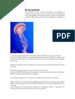 Características de Las Medusas