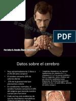 elcerebroyelaprendizaje-140927143737-phpapp01.pdf