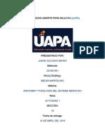 ANATOMIA TAREA 1.docx