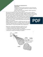 54637493-LA-ORGANIZACION-DEL-MUSCULO-ESQUELETICO.doc