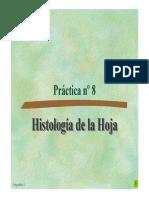 Histologia de La Hoja