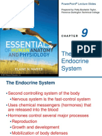 Endocrine System (Lecture)