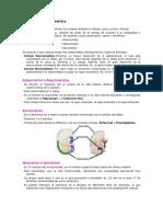 Clasificacion-Filogenetica