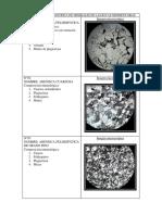 Descripción Microscópica de Minerales de Las Rocas Sedimentarias