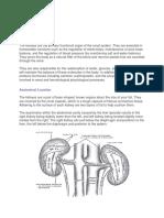medicamente din varicoză și tromboflebită