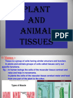(Preferred) Plant and Animal Tissues