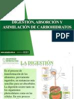 Digestión, Absorción y Asimilación de Carbohidratos