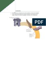 Sistemas Nerviosos en Invertebrados